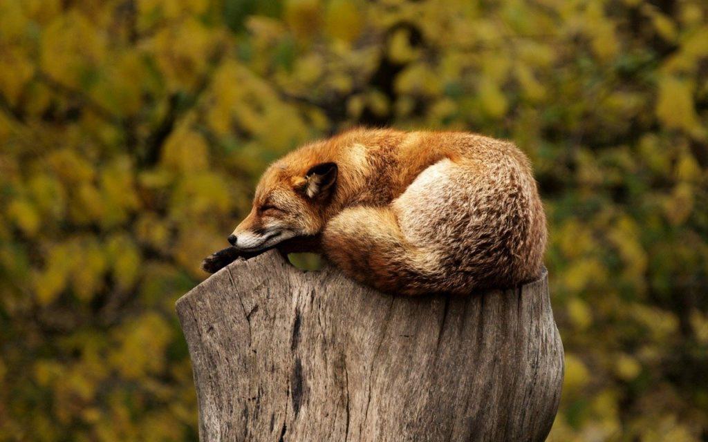 ゆっくり休みましょう