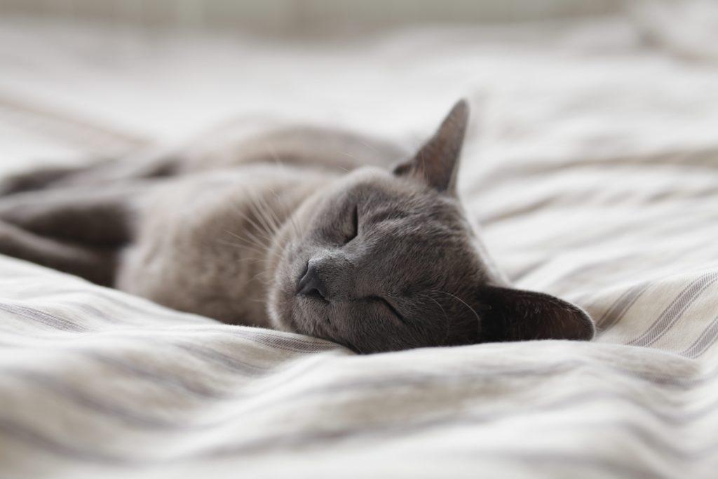 不眠の対処法